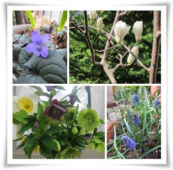 花々.jpg