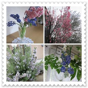 庭の草花.jpg